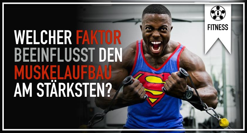 Welcher Faktor beeinflusst den Muskelaufbau am stärksten?.001
